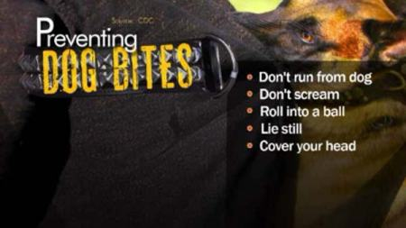 prevent-dog-bites